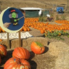 Tues. 10/18: Clayton Pumpkin Patch Outing